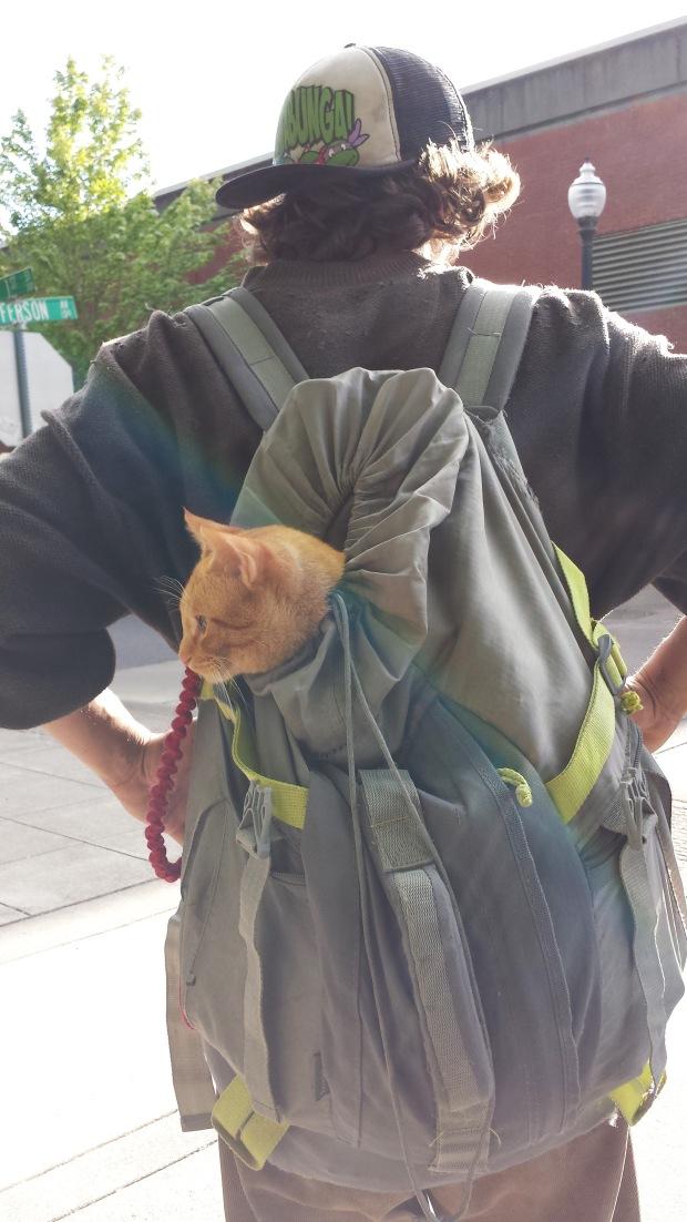 BackpackCat