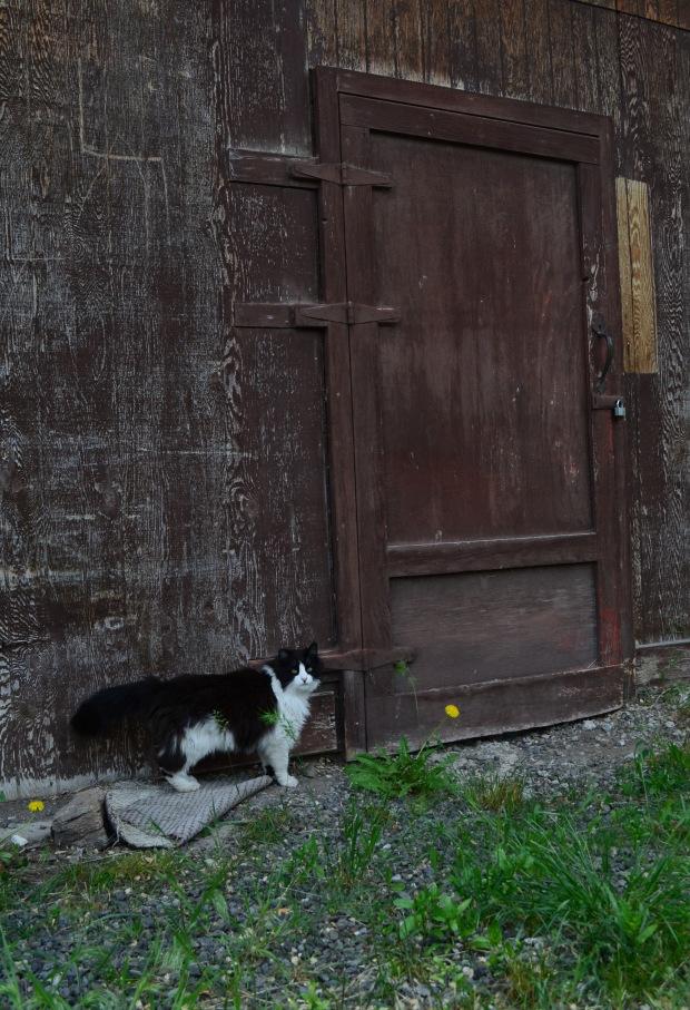 doorcat