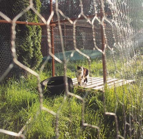 Cecilia enjoying her outdoor enclosure!
