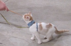 kitten_targettraining